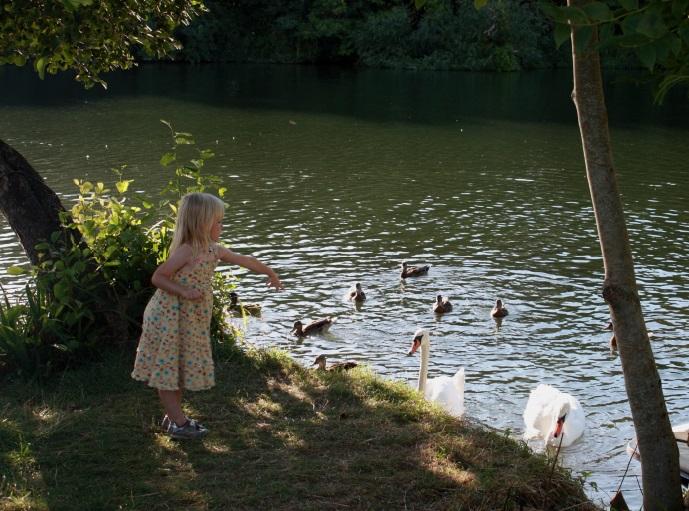 kid feeding ducks