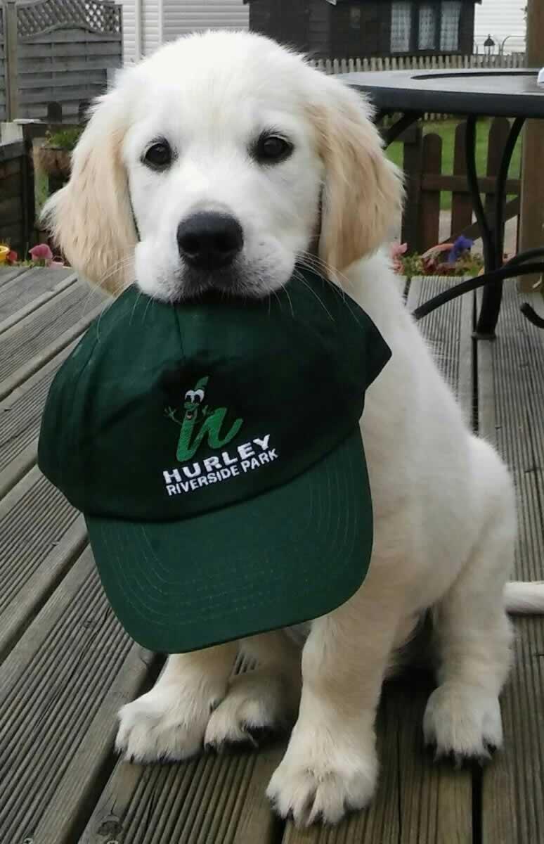 dog holding hat