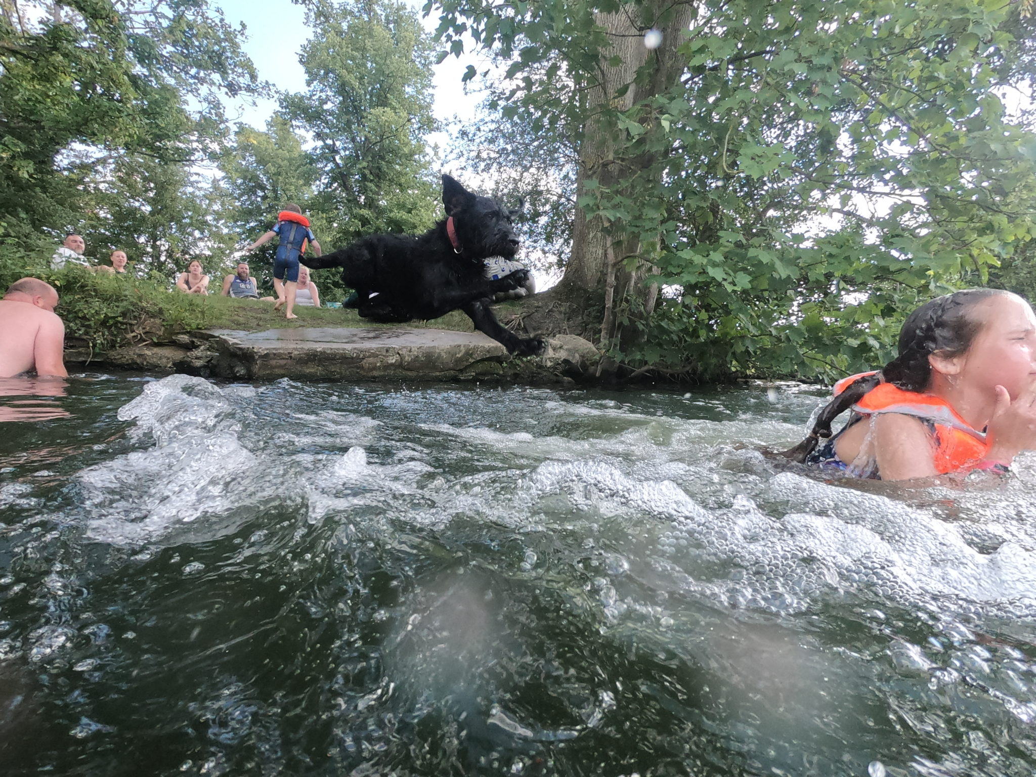 river with dog jumping