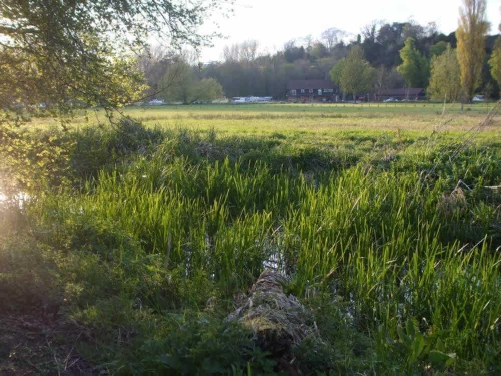 waterlogged grass