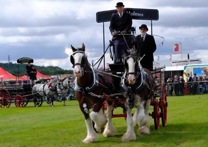 berkshire horse show